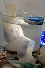 colectivo la figuera marina alta-el agua30